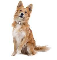 Meest gestelde vragen over loopsheid bij honden